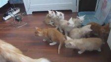 Annesinden Ödü Kopan Yavru Kediler
