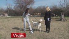 Bin Liralık Borç İçin Köpeği Haczettiler