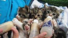 Biberonla Süt Emen Kediler