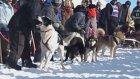 Yarış Başlasın Diye Yalvaran Köpek
