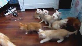 Yavrularını Korkutan Anne Kedi