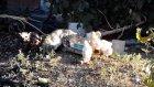 Sevimli Civcivler