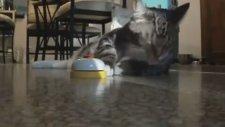 Acıkınca Zile Basan Kedi