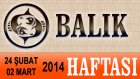BALIK Burcu HAFTALIK (24 Subat-2 Mart) Astrolog DEMET BALTACI, Bilinç Okulu, Astroloji, Burçlar
