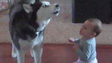 Bebek Taklidi Yapan Köpek