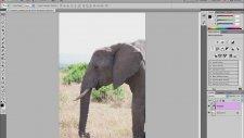 Adobe Photoshop Puppet Warp