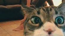 Kızın Videosunu Trolleyen Kedi