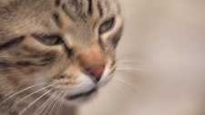 Nine Lives - Cats İn Istanbul