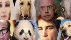 Hollywood Yıldızlarına Benzeyen Hayvanlar