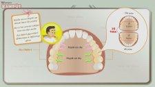 5. Sınıf Fen Bilimleri - Diş Çeşitleri