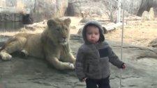 Hayvanların Çocuklara Yaptıkları