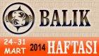 BALIK Bu HAFTA Burç ve Astroloji Yorumu 24 31 Mart 2014 Astrolog DEMET BALTACI, Bilinç Okulu