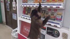 Otomat Kullanan Maymun!
