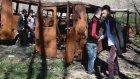 Asi Styla - İçim Yanar 2014 (Video Klip) Hd