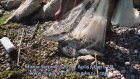 Serpme İle Balık Avı