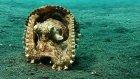 Damarlı Ahtapot Deniz Kabuğu Çaldı