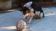 Şaşırtan Yetenekli Köpek