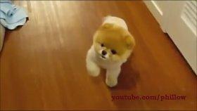 Ünlü Köpek Boo