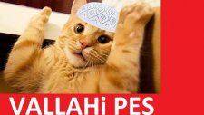 Trafoya Giren Kediler ! (Capsler)