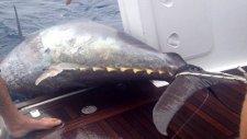Dünyan'nın En Büyük Balığı Yeni Zeleda!da Yakalandı Rekor Kırıldı