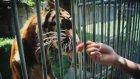 Hayvanat Bahçesi Değil, Ölüm Kampı!
