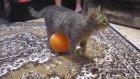 Üstüne Balon Yapışan Kedinin Dramı