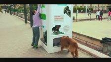Sokak Hayvanları İçin Yapılmış En Güzel Proje