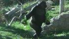 İnsan Gibi Yürüyen Hayvanlar