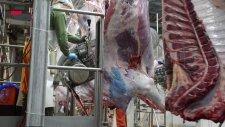 CEMSAN (Slaughterhouse Systems - Mezbahane Sistemleri)