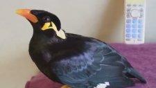 Kuşun İnanılmaz Konuşma Yeteneği