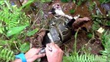 Boa Yılanının Ağzından Kediyi Kurtardı