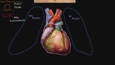 Kalp ile Tanışın