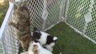 Kedi Yavru Köpeklerin Saldırısına Uğradı