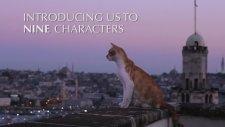 Kedilerin İstanbul'daki Hayatı Belgesel Oldu