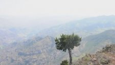 Ormanağzı Köyü-3