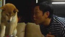 Öpülmeyi Sevmeyen Köpek