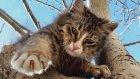 Tırmanan Kediler- komik kediler