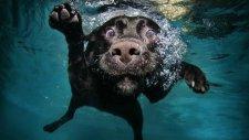 Sahibi Boğuldu Sanıp Çıldıran Köpek