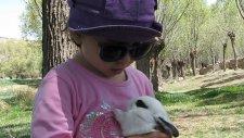 Tavşana Ninni