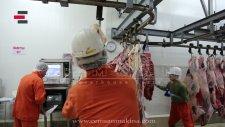 CEMSAN Et Yükleme Bölümü (Slaughterhouse Systems - Mezbahane Sistemleri)