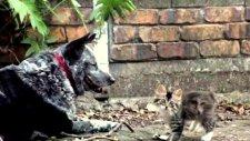 Engelli Kedi Yavrusunu Köpek Sahiplendi