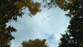 Mithat Körler - Sonbahar'da Sevmiştim