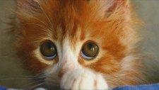 Kendini Suçlu Hisseden Kediler  - Funny Guilty Cat Compilation