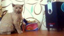 Bası Yakalamaya Çalışan Kedi