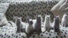 Minik Kediler Korosu