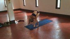 Yoga Handstand Press From Almost Tittibhasana