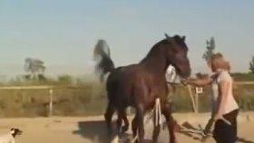Atların İlginç Çiftleşmesi