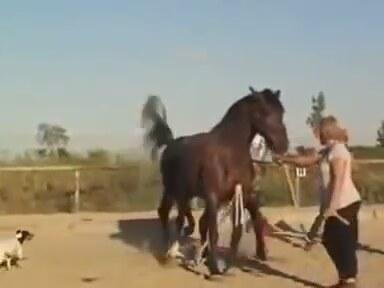 Atların İlginç Çiftleşmesi | İzlesene.com