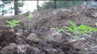 Ormanda ağaç kesip, kenevir yetiştirmiş - MUĞLA