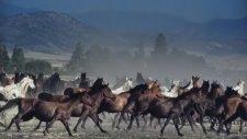 Muhteşem Atlar